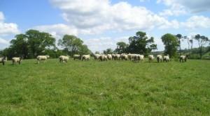 ferm farm